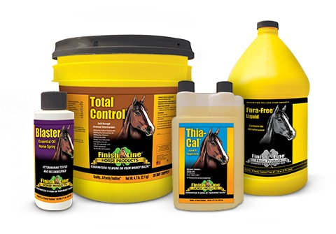 A Passion for Horse Care