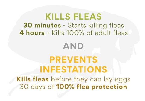 Flea Treatment and Prevention