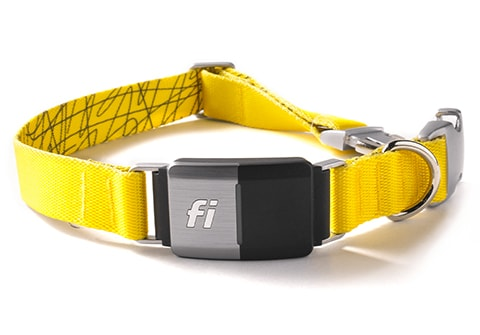 Fi - The Future of Collars is Here
