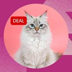 UNI CAT Sensible Cat VTS Green by TACKLE-DEALS !!!