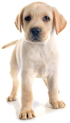 Help Puppies Grow