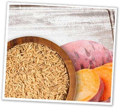 Healthy Grain or Grain-Free