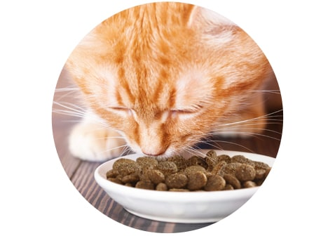 IAMS - No Artificial Preservatives